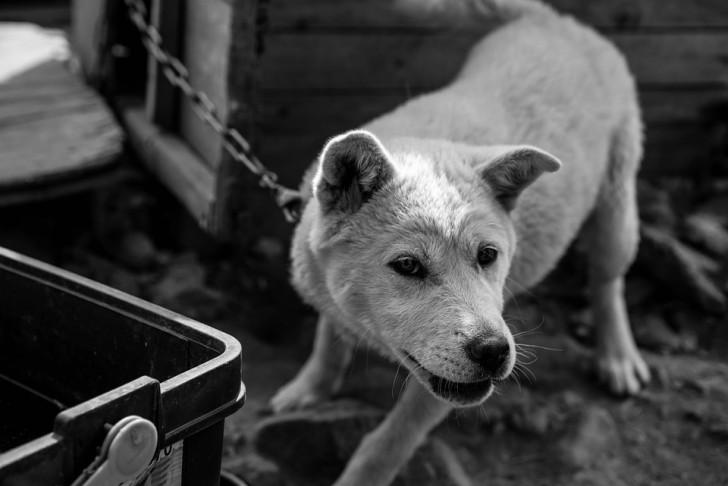 dog-765762_960_720