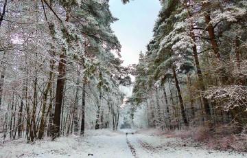 winter-618515_1280